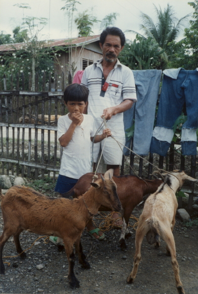 Grandfather, boy and goats